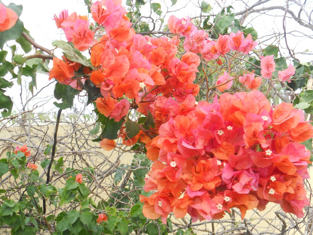 a bloemen rood ws