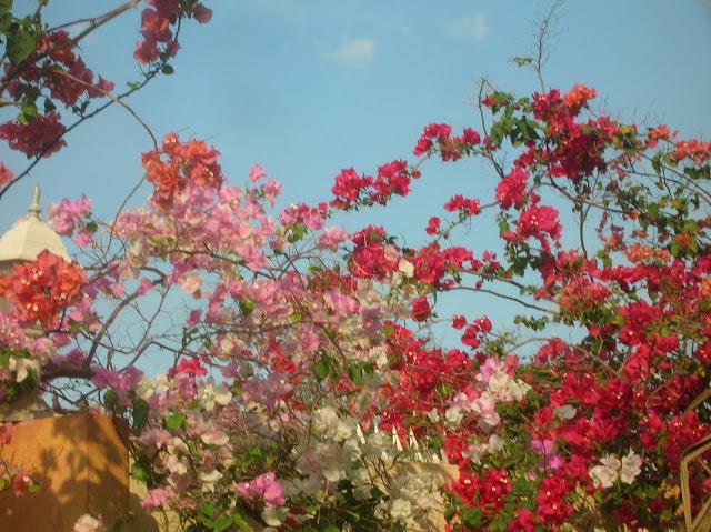 a bloemen