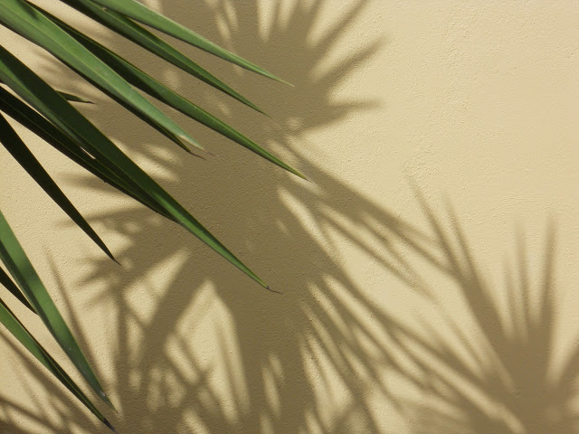 a schaduw plant 1 ws